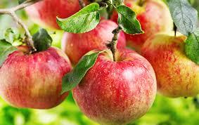 Vanliga äppelsorter